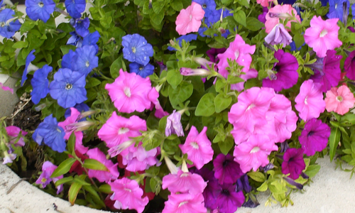 Riverwalk Flowerbox