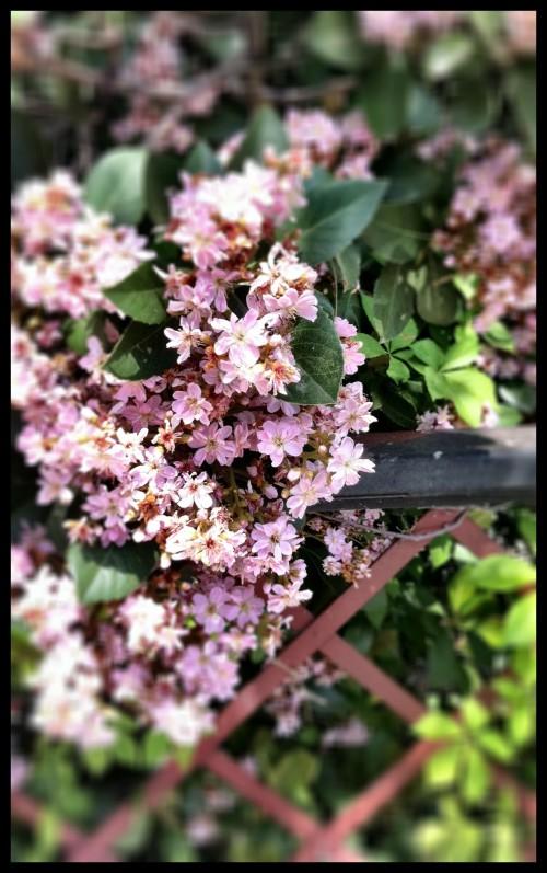 another Honey Bee