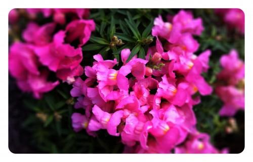 Riiverwalk Flowerbed