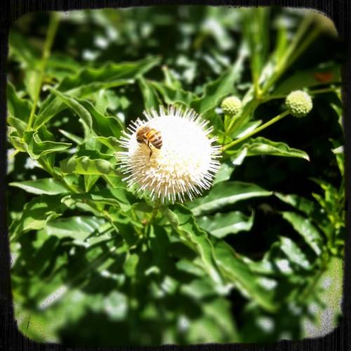 Bee and Bud