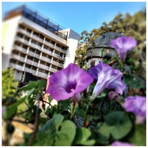 Jail House Morning Glory