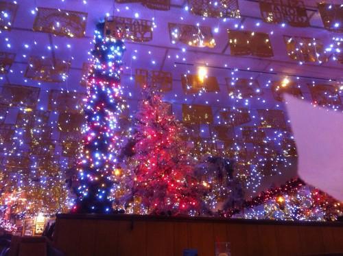 Perennial Xmas Lights