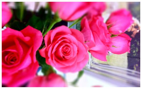 Pink Rose VD