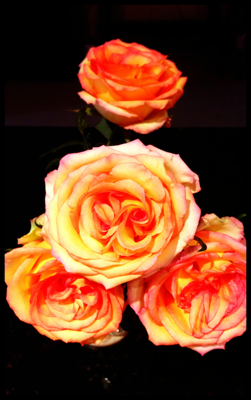 last year's roses
