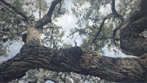 Tree Cactus One